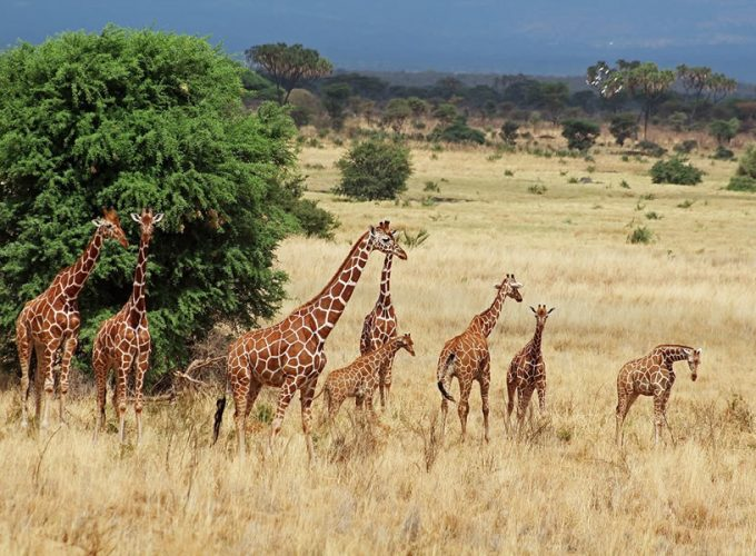 Your Reliable & Trusted Travel Partner in East Africa