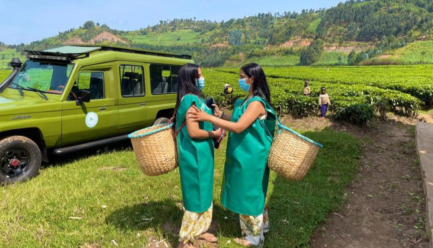 Rwanda tea plantation tours are remarkable experiences that will allow you to take part in the entire tea processing process with the community from planting to a hot cup of tea